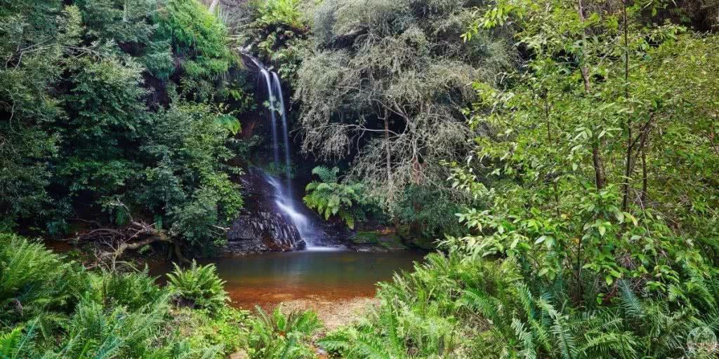 6 Wild Swimming Paradises in NSW Rachel Lewis Andy Lewis Lyrebird dell, waterfall, swimming hole, rocks, bushes, water