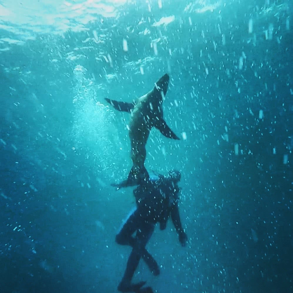 Swimming with Seals, The Dancers Of The Sea // Montague Island (NSW) Joel Johnsson, seal, person, diver, underwater, blue