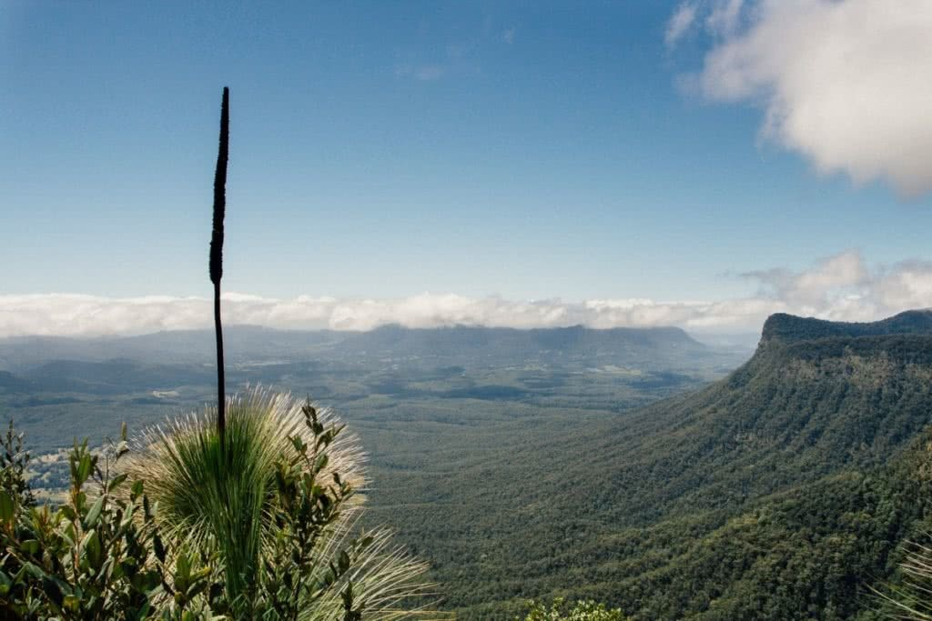 Best Brisbane Escapes South of the City Yasmin Maher, lookout, mountains, horizon, clouds, grass tree, Pinnacle views