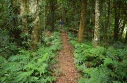 Summit Mt Mitchell and Mt Cordeaux // Main Range National Park (QLD) trail rainforest