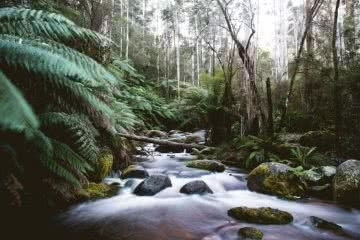 Toorongo Falls Victoria Gippsland LORENZO SANTUCCI, creek, long exposure, water flowing, ferns, boulders