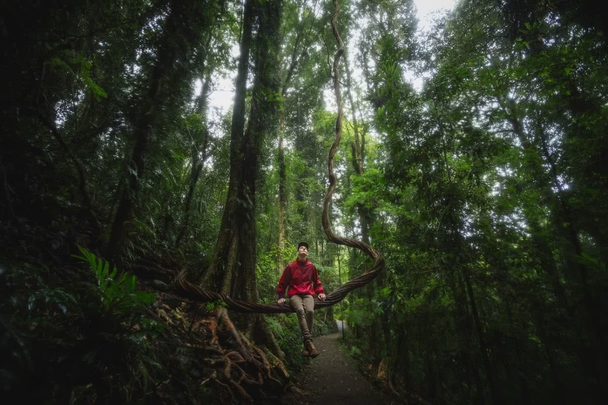 A Wet Monday Morning In Dorrigo National Park (NSW), Liam Hardy, vine, nature seat, rainforest, trees