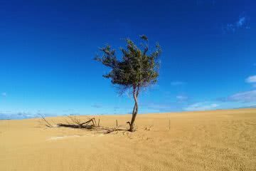 An 'On The Cheap' Winter Week Off Work, Mike Pidgeon, tree, sand dune, lonely, alone, remote, sky