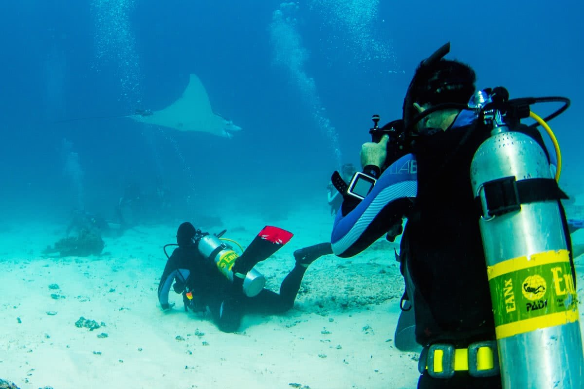 Jules Ingall Lady Elliot Island Eco Adventure (QLD) scuba diving great barrier reef hero stingray manta ray