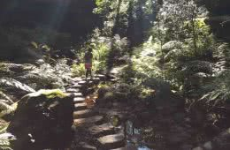 A Step Back in Time // The Grand Canyon Track (NSW) Bob Tronson, Steps, sunbeams, hikers, forest, stream