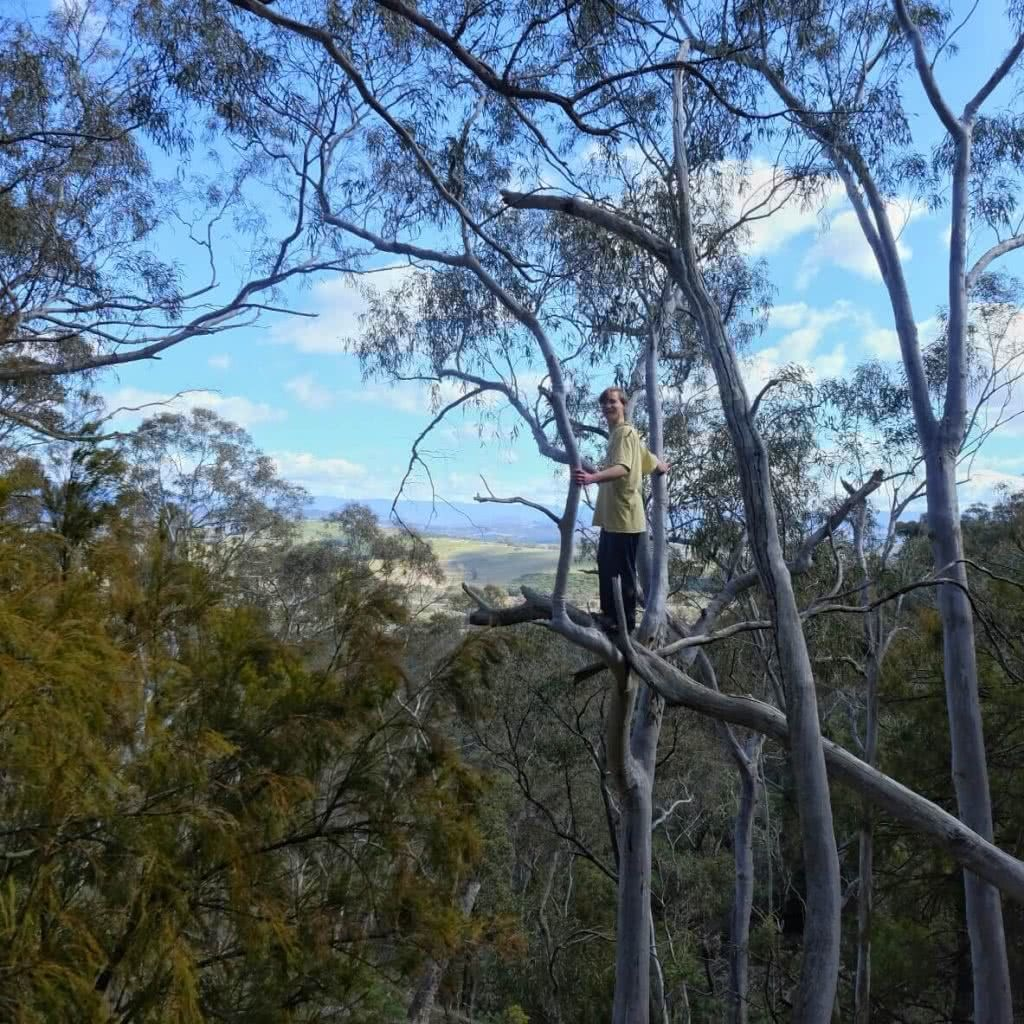 Cheeky Canberra Climbing // ACT, tree climbing, man, treetops, view