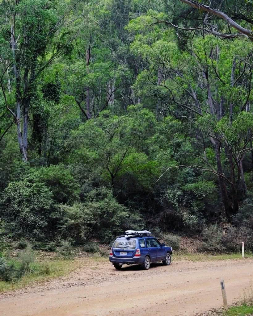 Camping The Deua (NSW) Eliot Duffy forest dirt road car 4WD