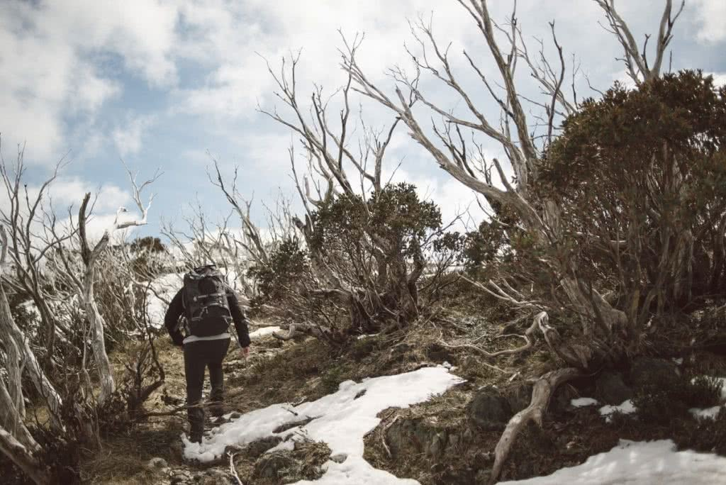 Traversing the Razorback // Alpine National Park (VIC), Mitchell Hodge, hiker, snow, trees, trail