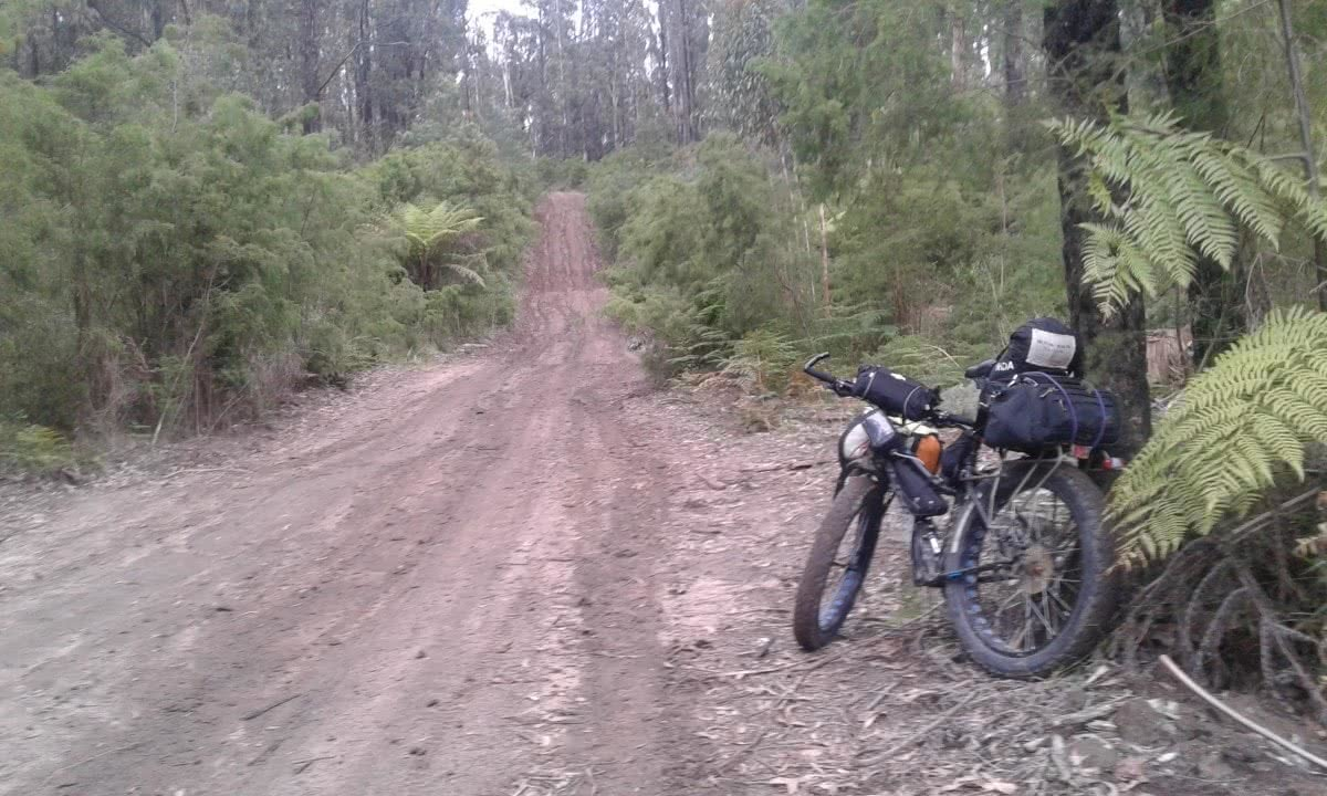 Fat Weekender // The Great Forest National Park (VIC) Aidan Kempster, fat bike, packs, road, dirt, ferns, bikepacking