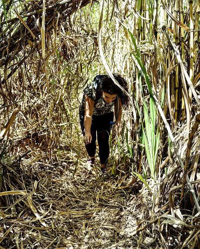 A Gem by the Glitter City Mt Cougals (QLD) Dan Parkes, sugar cane, woman, crouching