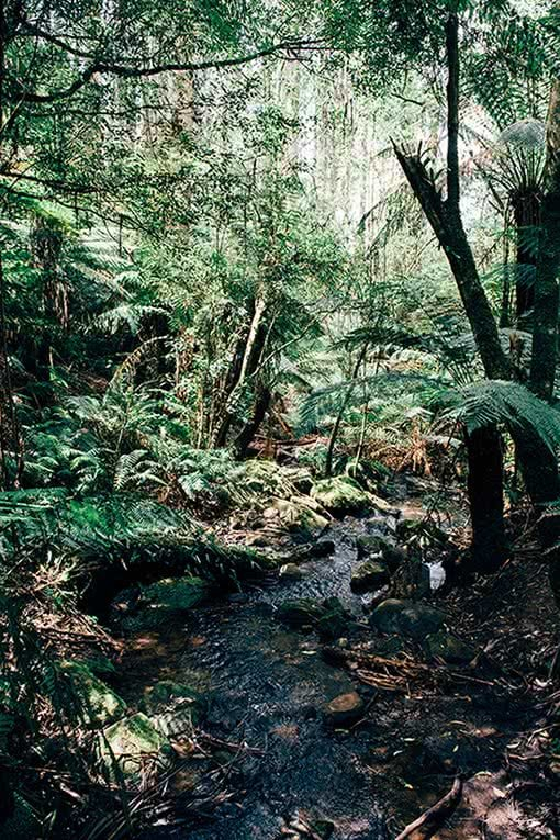 day in the dandenong ranges, Nathan Giles, stream forest