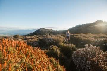 Cradle Mountain Side Trips // Mt Roland (TAS) Morgan Cardiff mt roland tasmania scrub hiker
