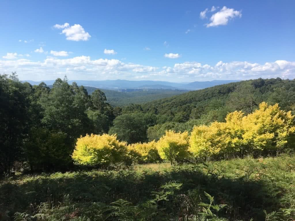 Four Hidden Hiking Gems in Melbourne's Outer-East Cumberland1 john feeney hiking society melbourne's outer-east
