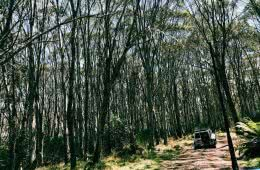 Four-Wheel Drive trail to Little Murray