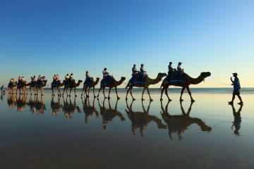 animal Broome Western Australia Cable Beach Zoe Vaughan camels