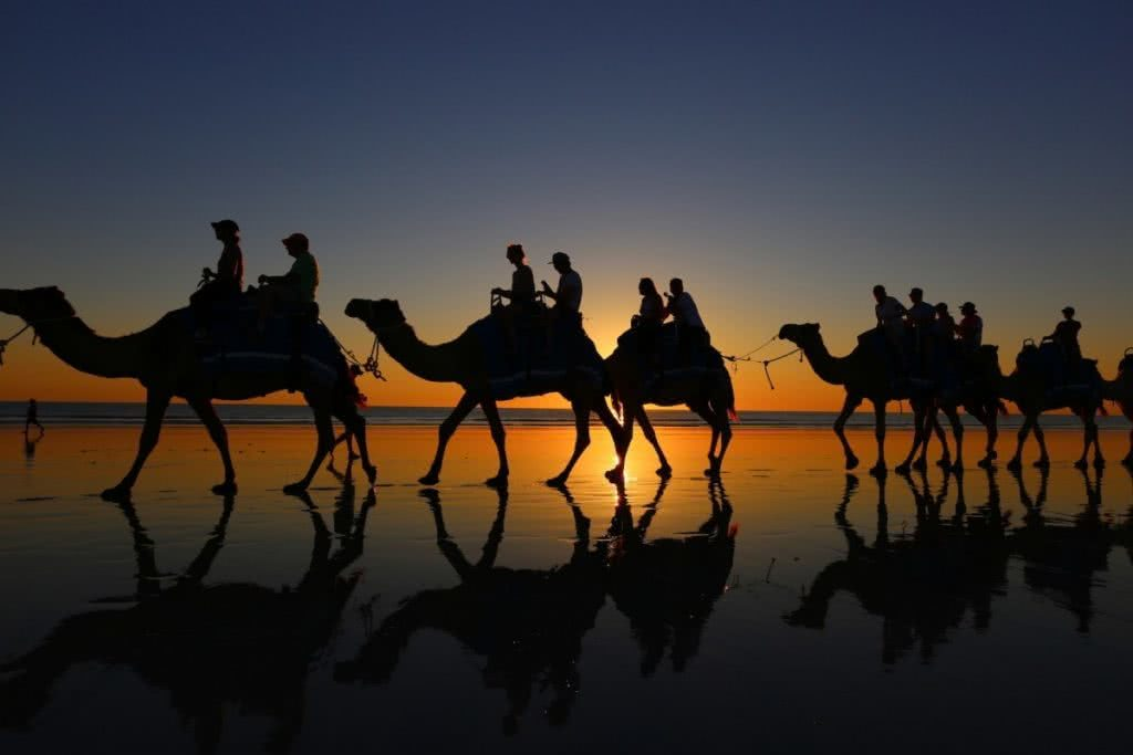 The Pearl of the North West // Broome (WA), Zoe Vaughan, camels, animal, ride, sunset, silhouette, reflections. wet sand, legs, convoy, train
