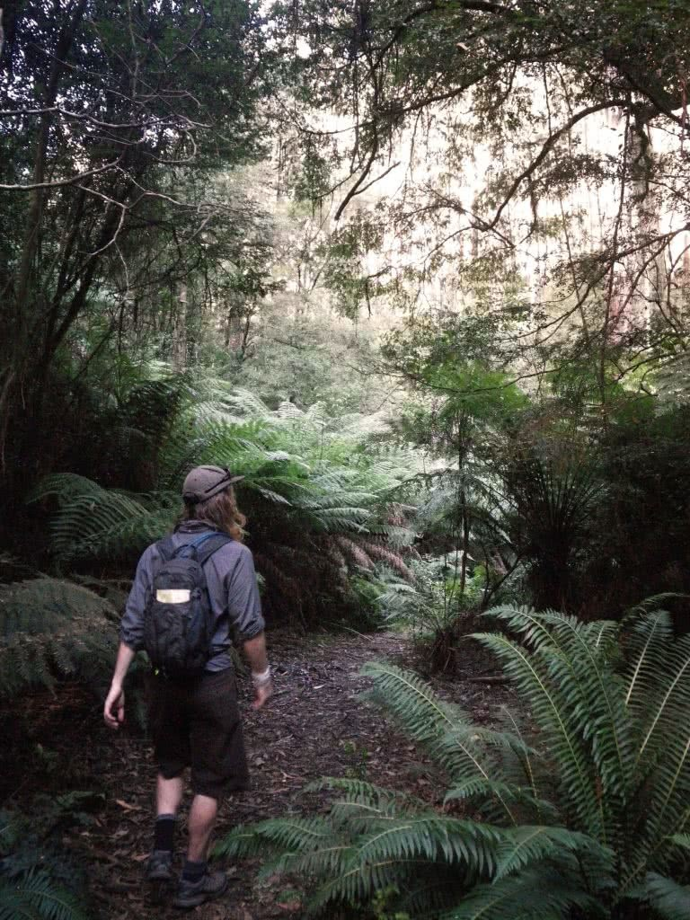Last Day of Summer, Wirrawilla Rainforest and Myrtle Gully, Toolangi, Victoria, Aidan Kempster, ferns, walk