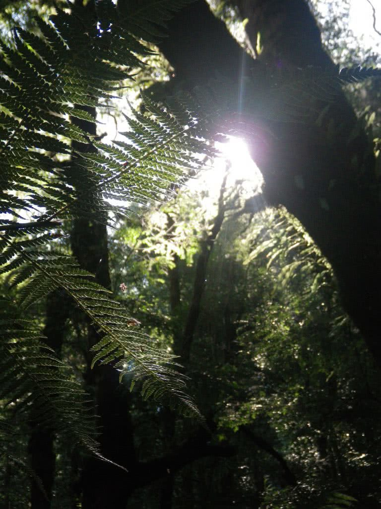 Last Day of Summer, Wirrawilla Rainforest and Myrtle Gully, Toolangi, Victoria, Aidan Kempster, fern, sunlight, flare