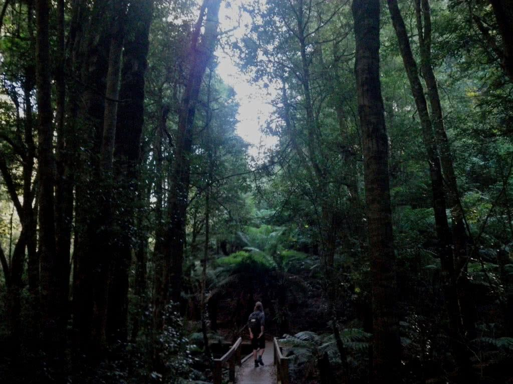 Last Day of Summer, Wirrawilla Rainforest and Myrtle Gully, Toolangi, Victoria, Aidan Kempster, canopy, dark