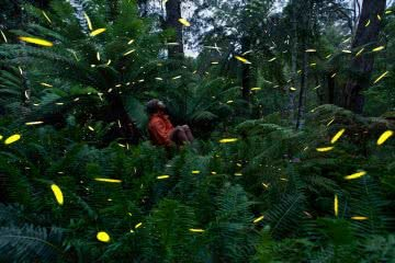 Joel Johnsson, Fireflies Blue Mountains NSW Joel Johnsson, bugs, long exposure, man, bush, forest, ferns