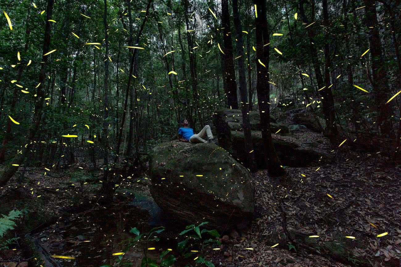 Joel Johnsson, Fireflies Blue Mountains NSW Joel Johnsson, bugs, long exposure, man, bush, forest