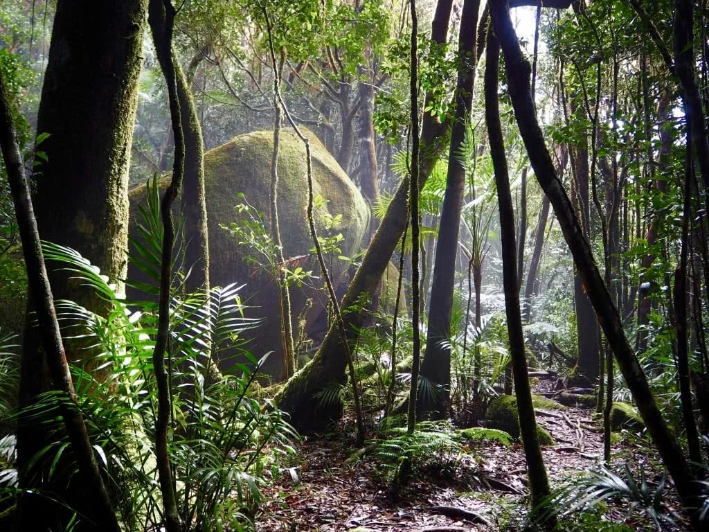 Shona Hubsher Mount Bartle Frere QLD highest mountain rainforest Wooroonooran National Park