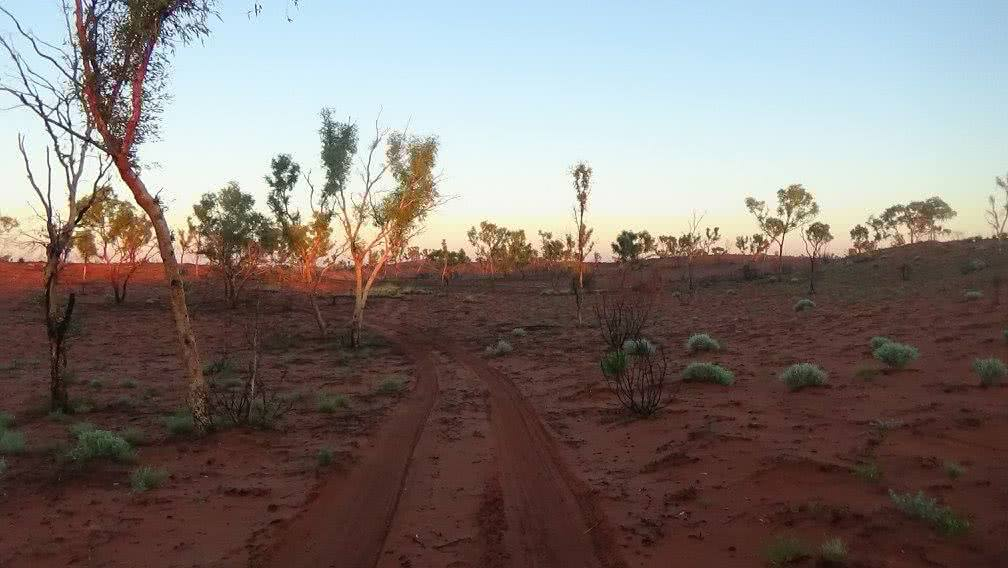 Sam Mitchell, Canning Stock Route, Outback, trees, desert