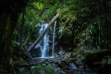 Lisa Owen_Best Intermediate Hikes Near Brisbane_Intro, waterfall, fallen tree, bush