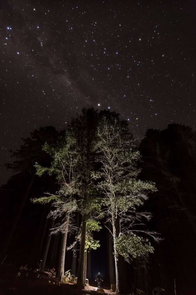 Jon Harris, Sugarpines Walk, Bago State Forest, pine trees, astrophotography, night