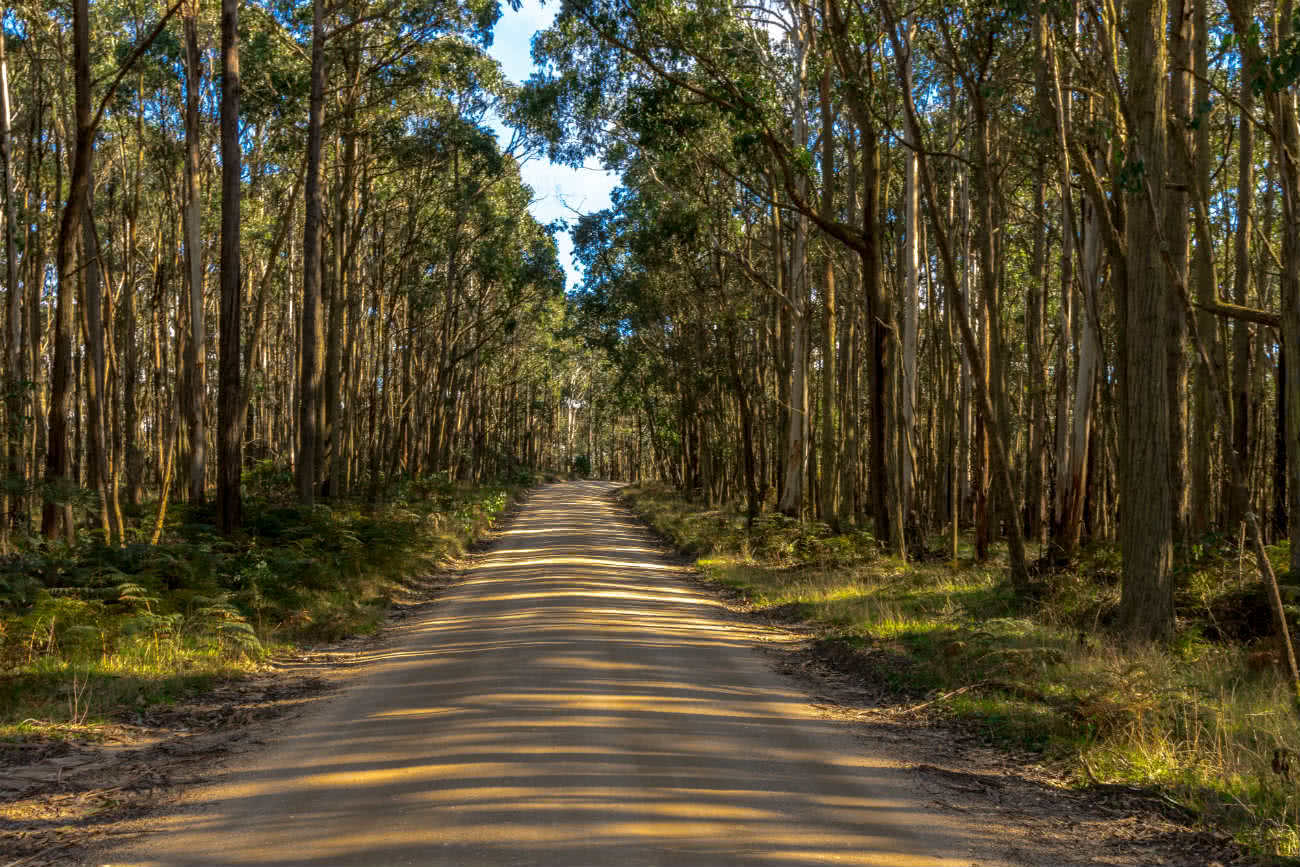 Wombat Loop Mountain Bike Trail Melbourne VIC, Michelle Linnane, forest, road, trees, grass