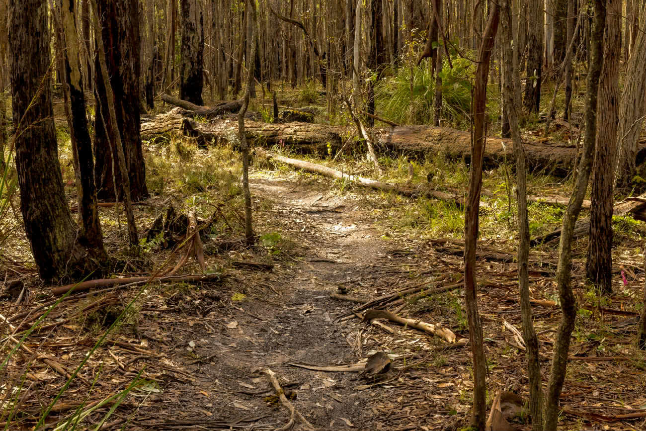Wombat Loop Mountain Bike Trail Melbourne VIC, Michelle Linnane, forest, trail, trees, grass