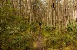 Wombat Loop Mountain Bike Trail Melbourne VIC, Michelle Linnane, forest, trail, trees, grass, hiker