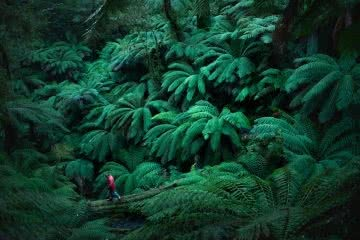 lachie thomas, explorer of the month, hero, rainforest, ferns