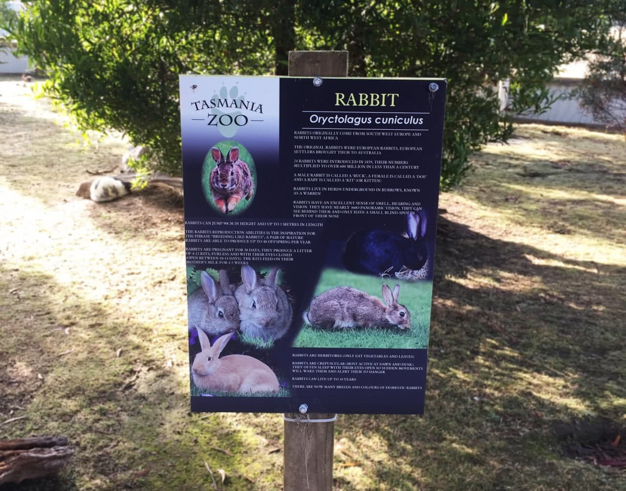 tasmania zoo, rabbit, sign
