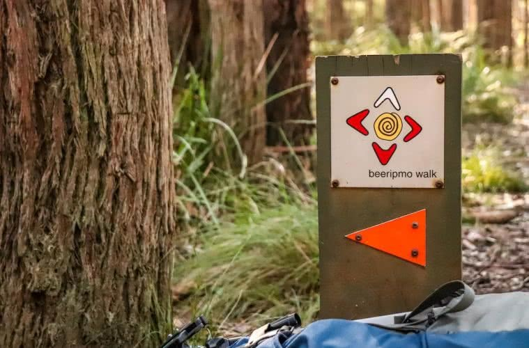 Beeripmo Walk // Mt Cole State Forest (VIC) Chris Paola sign, arrow, grass, trees, beeripmo logo