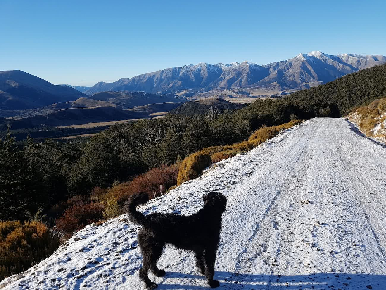 Dog Tails With Oshy // Cuckoo Creek Trail (NZ) Ian Middleton, dog, snow, trail, mountains, forest