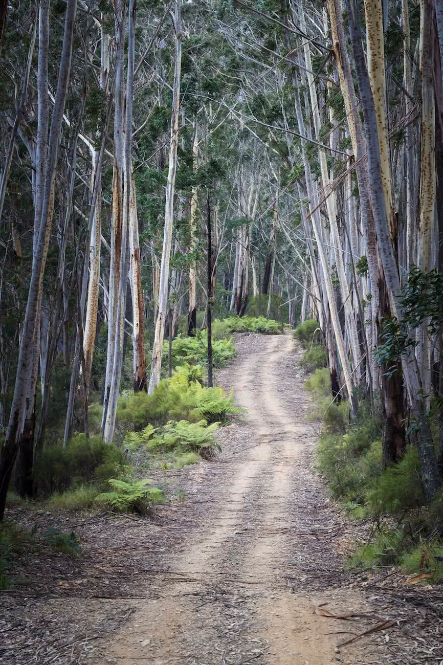 A Doable 4WD Day // Deua NP (NSW) Rachel Dimond, road, fire trail, trees