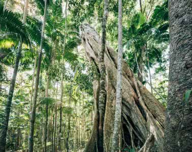 In Search Of A Rainbow // The Cooloola Great Walk (QLD) Jesse Lindemann, strangler fig, tree, forest