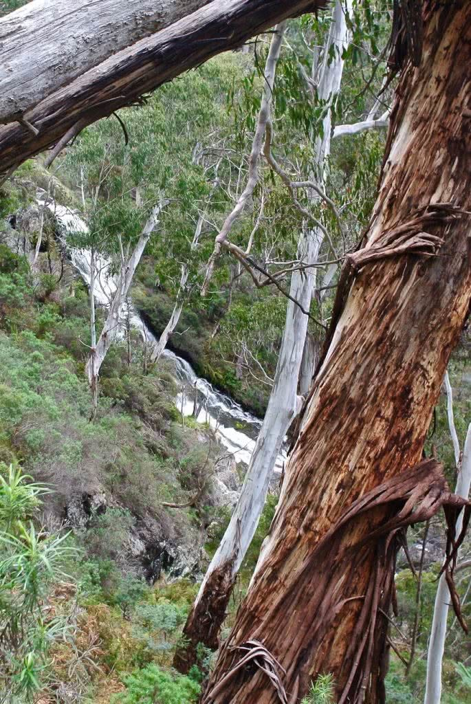 Follow The Old, Hand-Drawn Map // Buddong Falls (NSW) Cara van Wyk, waterfall, trees, forest