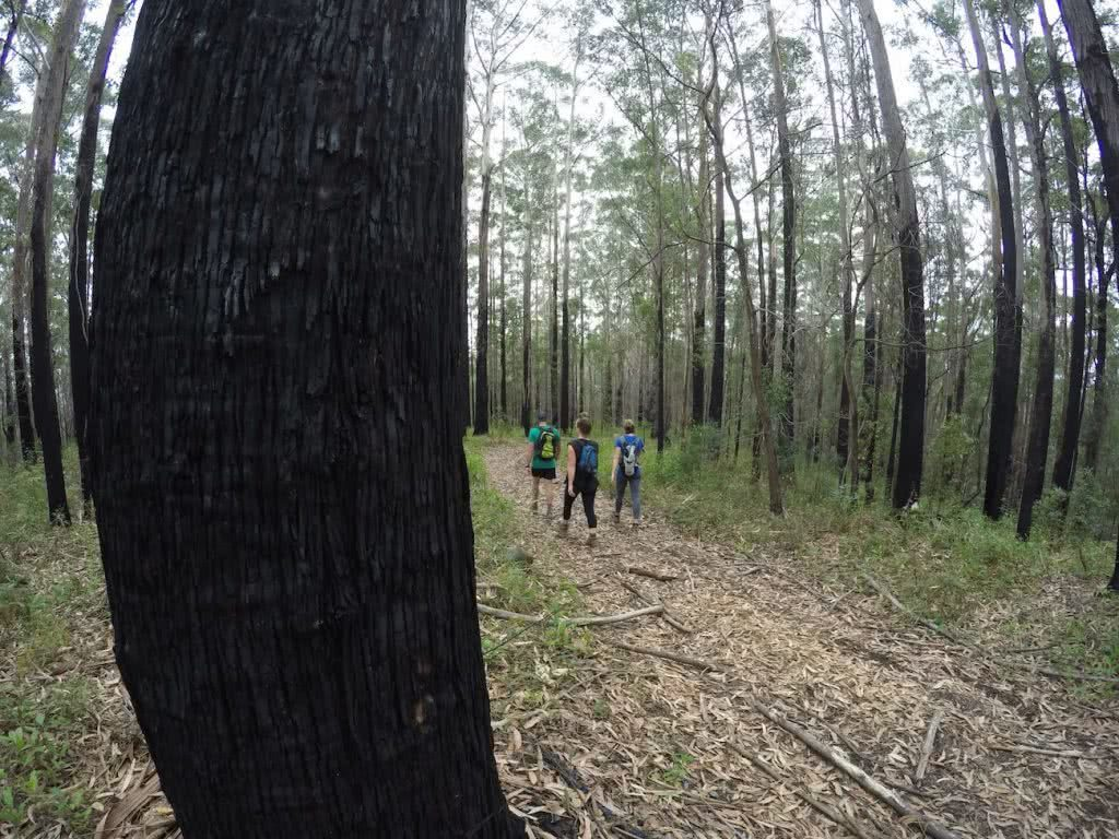 A Tiny Hidden Gem // Yarriabini National Park (NSW) Calumn Hockey, forest, tree, hikers