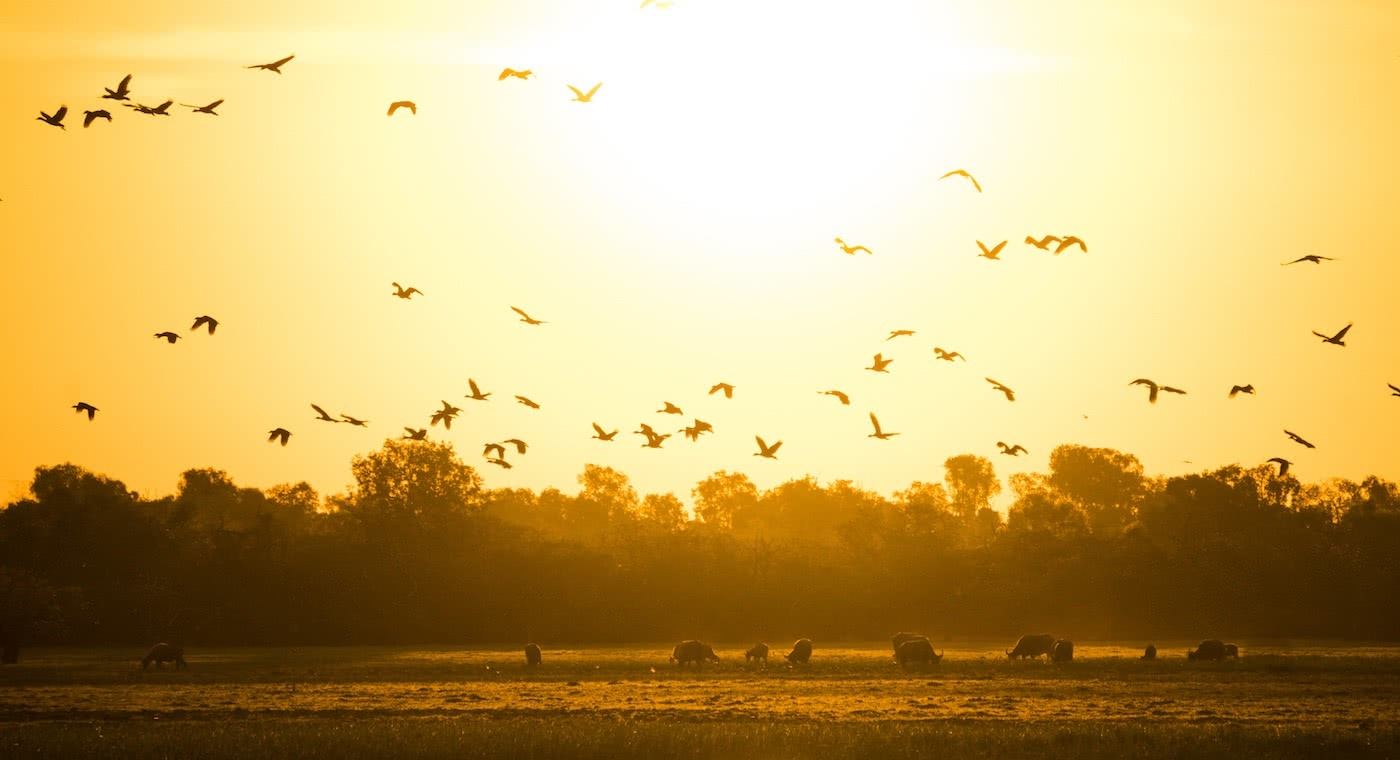 Lewis Burnett, Hunting for Paradise, Kakadu National Park, Photo Essay, bird flock