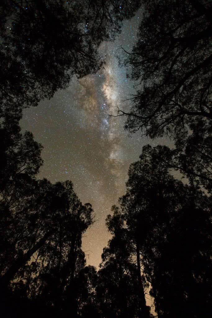A Blast Up Booroomba Rocks // Namadgi NP (ACT), Dan McInnes, astrophotography, night sky, trees, silhouette, milky way, stars, hero