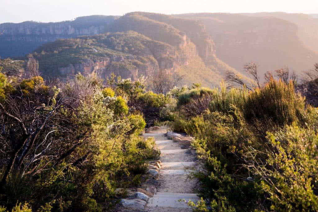 Rachel Dimond // Explorer Of The Month - March '18, Narrow Neck - Blue Mountains, path, bush, scrub, track, trail, mountains, ridge