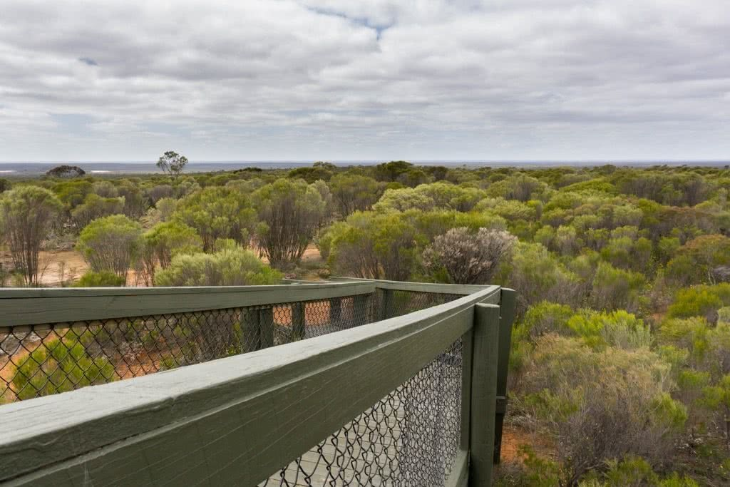 Desert Blooms // Little Desert National Park (VIC), Isobel Campbell, Trig point platform, lookout, walkway, trees, view