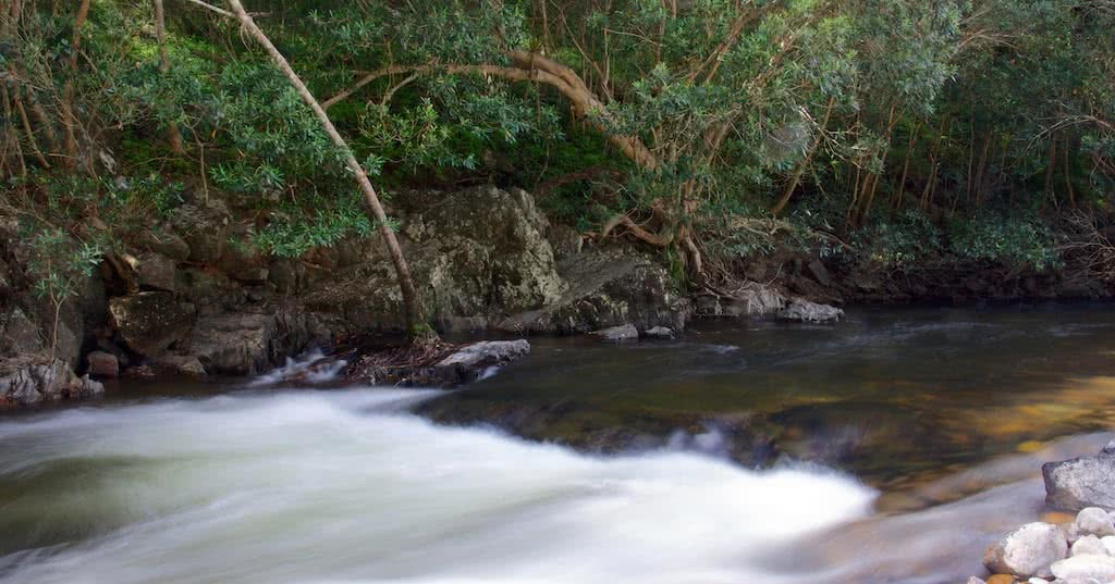 david nobel, wild kowmung river, blue mountains, environment, activism, nsw