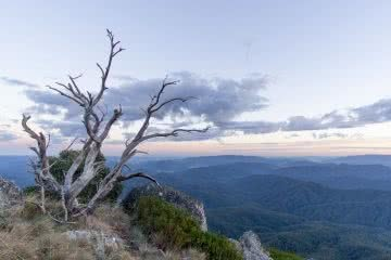 Mt Cobbler Plateau Circuit // Alpine National Park (VIC), Isobel Campbell, Sunrise Mt Cobbler, dead tree, peak, view, valley, horizon