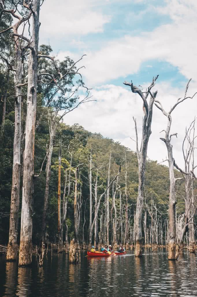 When Everything Flows // Kangaroo Valley Canoeing Escape, Aron Hailey, dead forest, flooded, canoes, sky, hillside,
