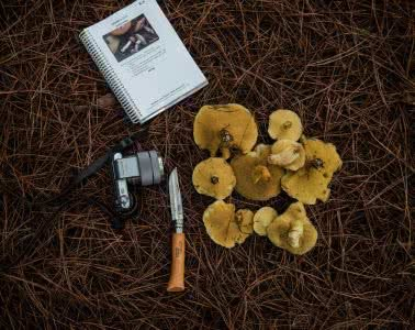 lifecykel, how to forage for wild mushrooms, mushrooms, fungi, plants, food, yum
