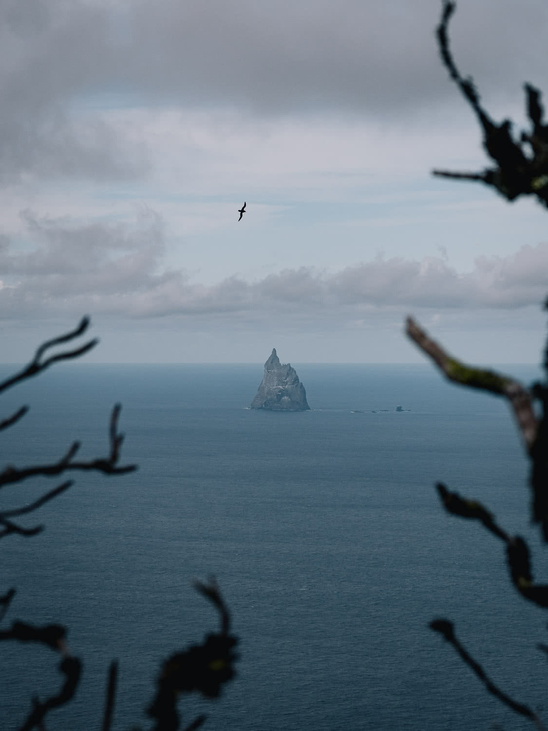 Lord Howe Island's Photography Hot Spots, Matt Horspool, Ball's Pyramid, island, ocean, alone, trees, frame