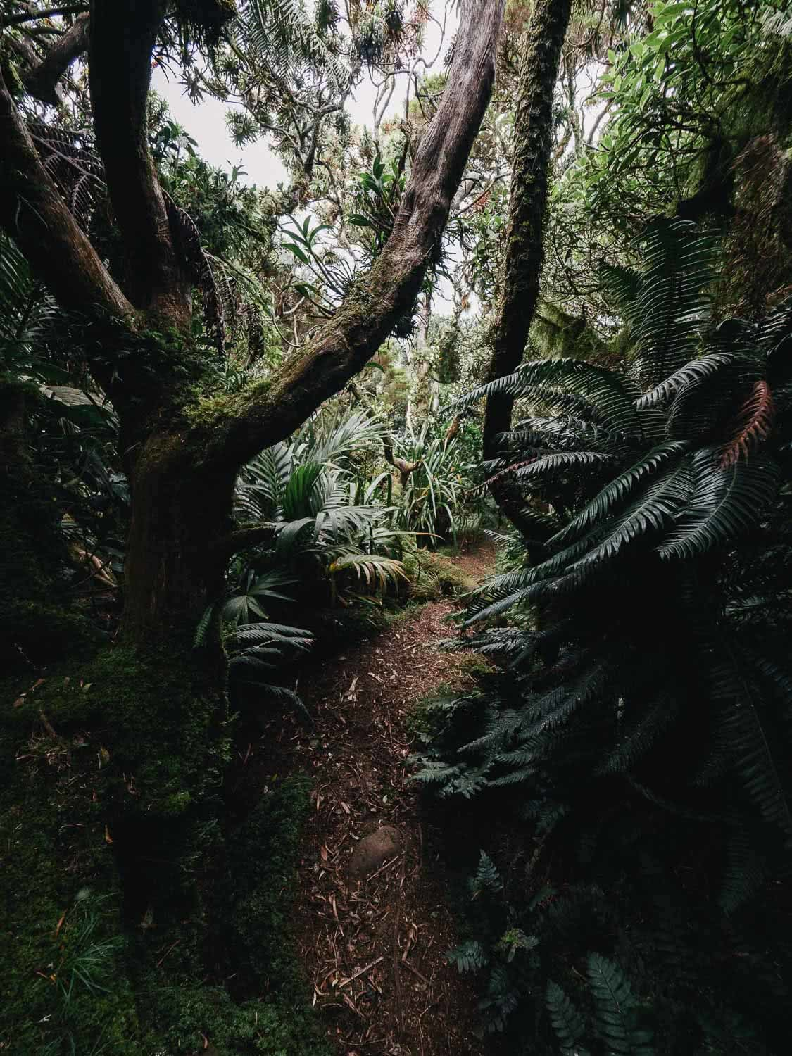 Lord Howe Island's Photography Hot Spots, Matt Horspool, forest, trees, path, understorey